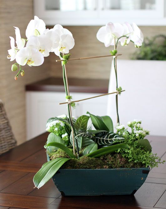 Best images about orchids on pinterest orchid flowers