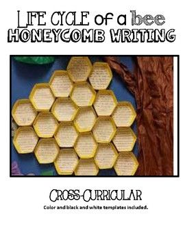 Bring your life cycle unit to life! Students can write facts or the life cycle process of a bee life cycle .Turn their writing into a 3- dimensional honeycomb to display their work!