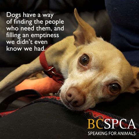 Dogs are kind of amazing like that. Carter is ready to fill your heart. He is currently in a foster home, please find out more at the BC SPCA Vancouver Branch