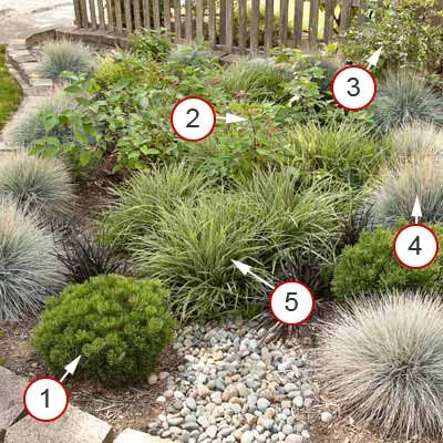 More No-Fuss, Neat and Tidy Plants    This rain garden is all about looking fine with little care. There are no flowers to clip or spent perennials to cut back, yet the garden still looks interesting because of the subtle color and texture variations.