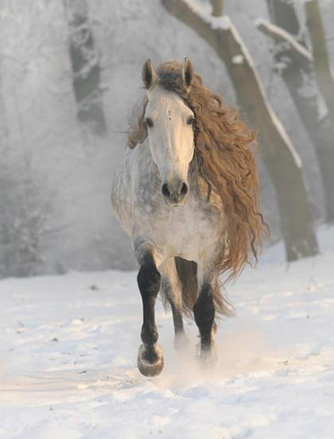 Beautiful strong Horse