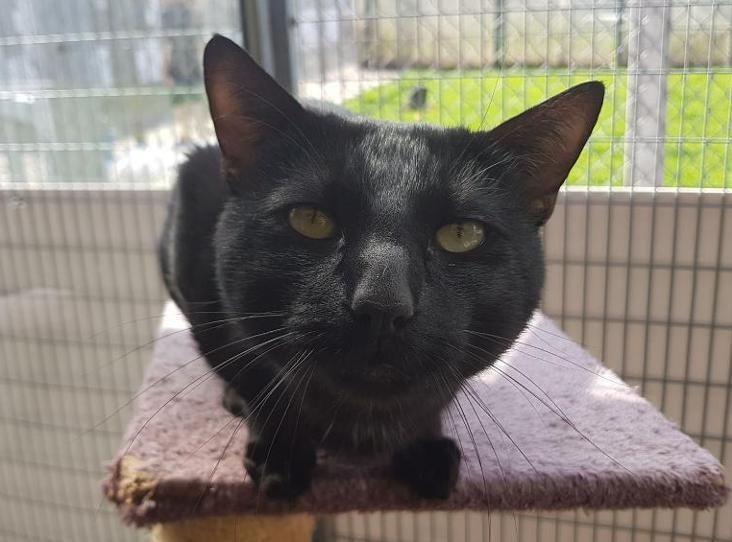 SIMON Find a pet Black cat, Cats, Pets