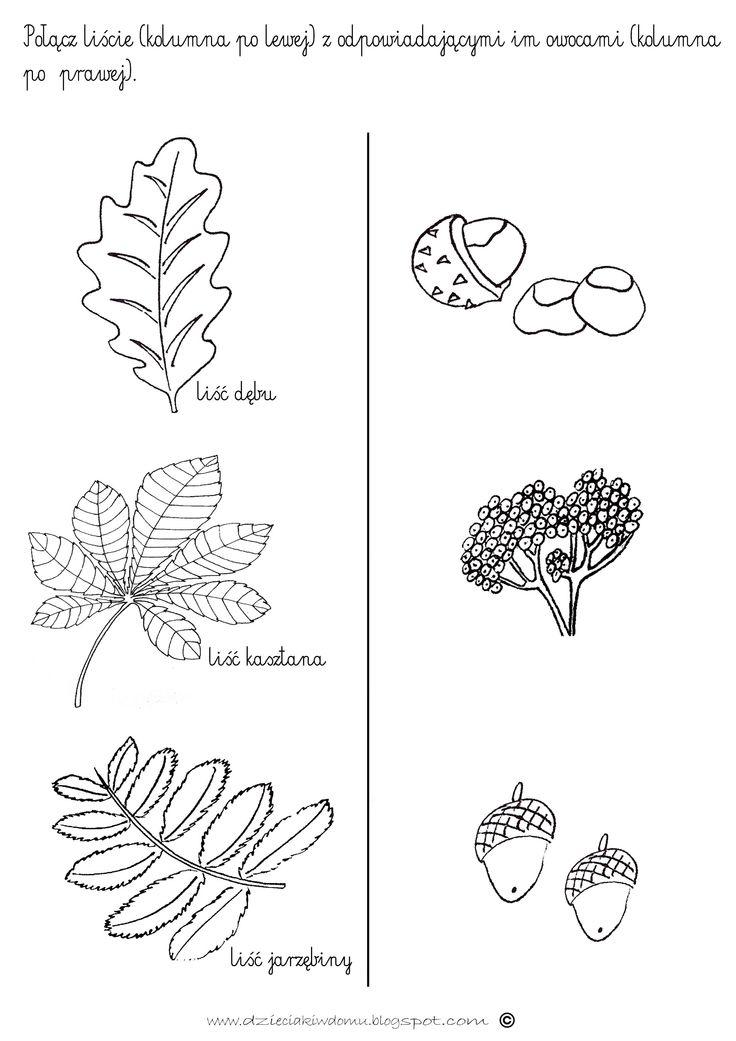 Drzewa i ich owoce - karta pracy www.dzieciakiwdomu.blogspot.com
