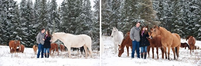 Herd of Quarter Horses in the snow. Palamino horse. Engagement Session Photography by Robyn Mumford of Robyn Louise Photography in Quesnel, BC.  Cariboo, Quesnel, Williams Lake, BC and beyond equine and wedding photographer. www.robynlouise.com #quarter #horse #bucksin #engagement #winter #snow #horses #sorrel #palamino