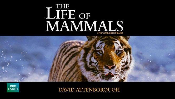 Watch The Life of Mammals Online - tvduck.com