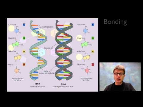 ▶ Nucleic Acids - YouTube. Bozeman Science