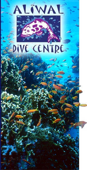 Aliwal Dive Centre - diving with sharks without a cage