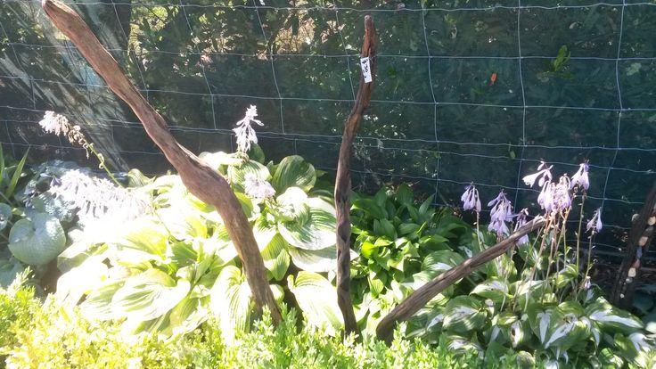 'Driftwood Form' $30 NZ Dollars Set of three driftwood garden rods