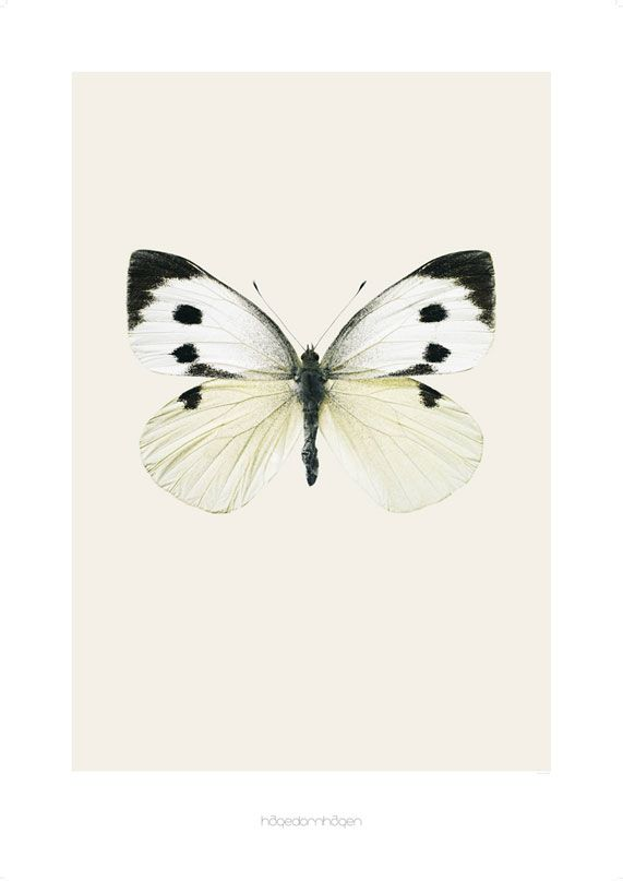 Pieris brassicae - butterfly print from www.hagendornhagen.dk