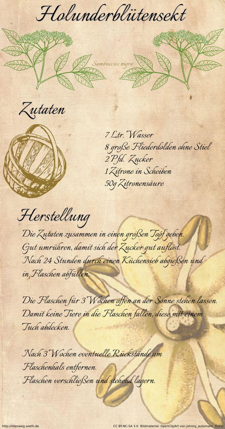 Der Duft des Holunders - Holunderblütensekt selbst hergestellt