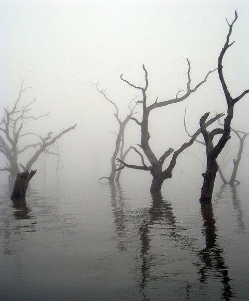 Misty flood
