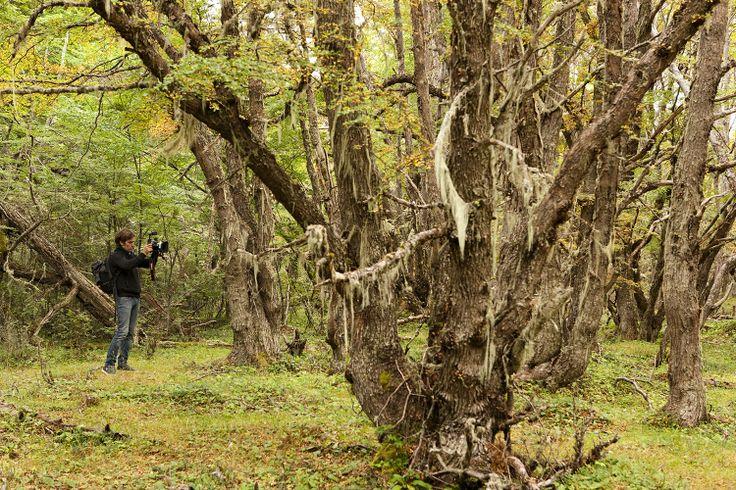 """Nos trasladamos a la ciudad de Puerto Williams , donde su lejanía ha conservado uno de los valores más importantes a salvo: """"su naturaleza"""". Enormes montañas nevadas, bosques de lenga y una biodiversidad sorprendente!  Listos para conocer Puerto Williams! http://bit.ly/1kB3iG5"""
