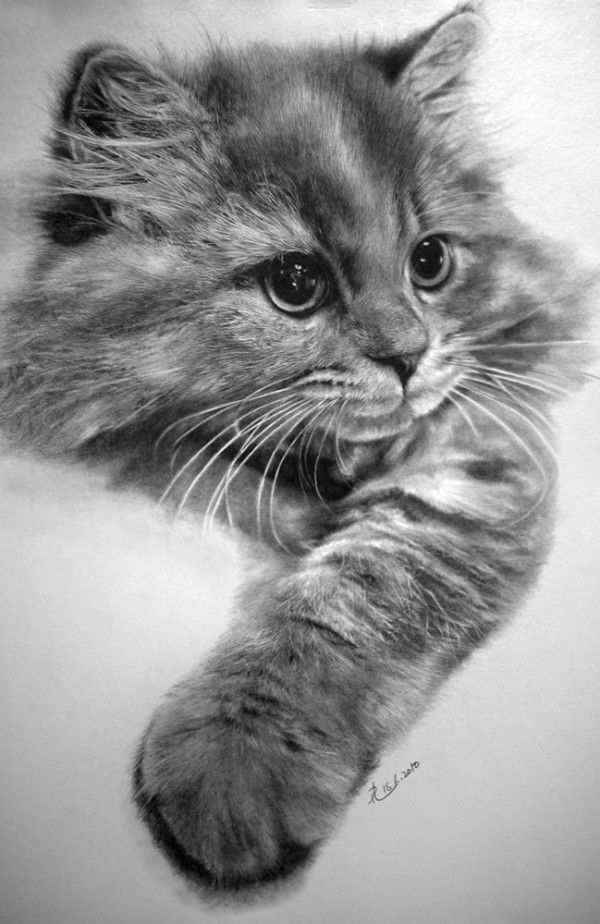 Photo Realistic Pencil Drawings by Paul Lung: short line media was used in order to depict the texture of cat's fur clearly.
