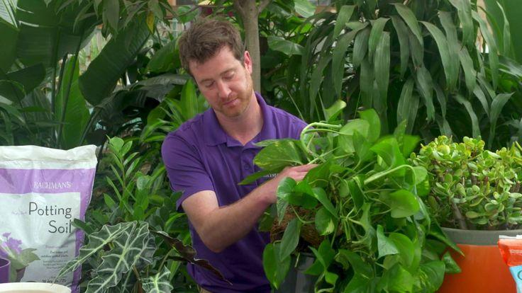 How to Repot Indoor Plants 2016