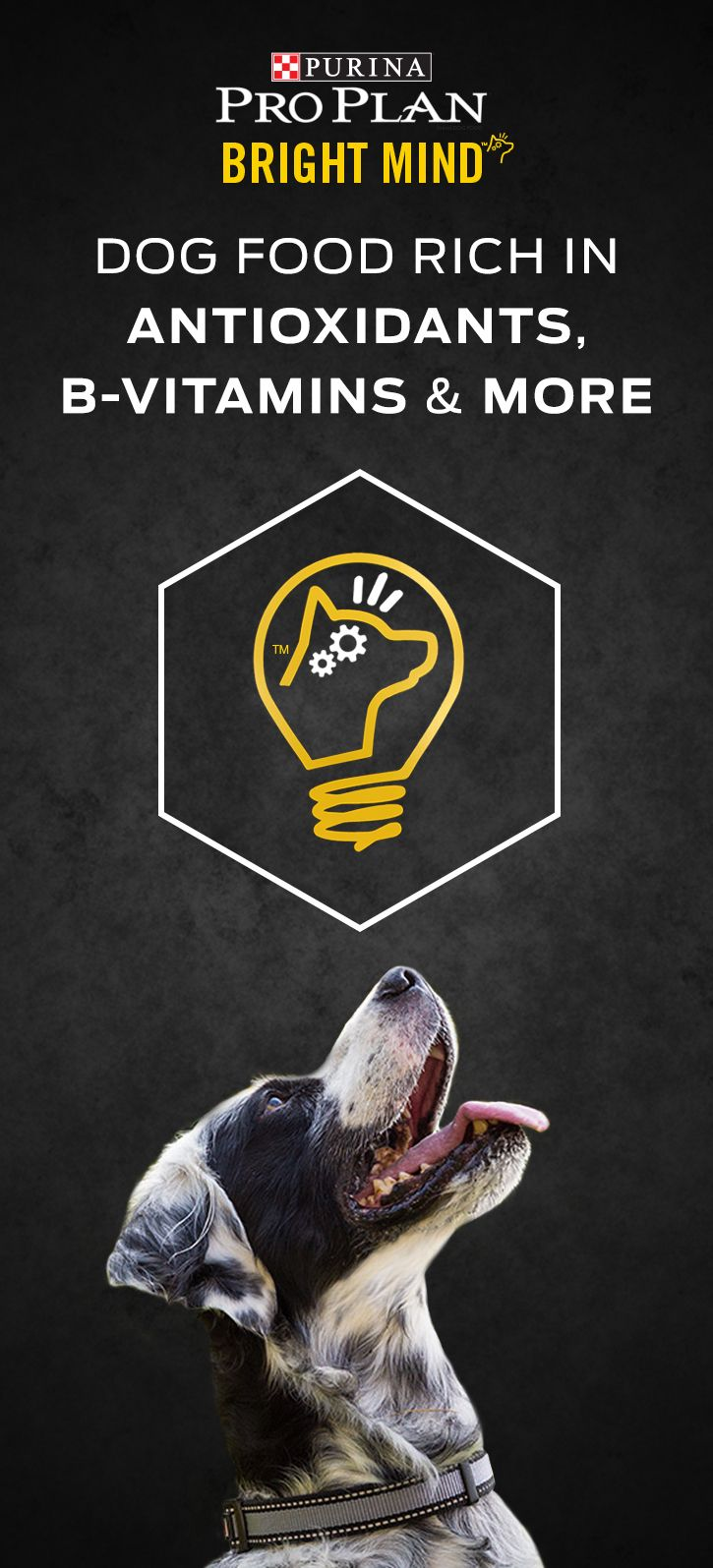 Is your dog's food feeding your dog's brain? Purina Pro Plan Bright Mind Adult is specially formulated to nourish your dog's mind throughout adulthood. Our Bright Mind Adult formulas contain a proprietary blend of nutrients including DHA & EPA, Antioxidants, B Vitamins, & Arginine to support a dog's cognitive health throughout adulthood. And if your dog is 7 years or older, there are Bright Mind Adult 7+ formulas which promote mental sharpness and alertness in dogs seven and older. Try it…