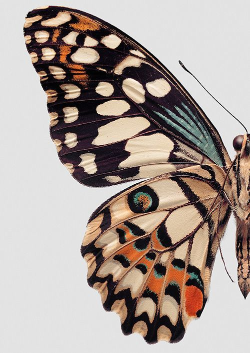 let a butterfly's wing inspire your wedding color palette