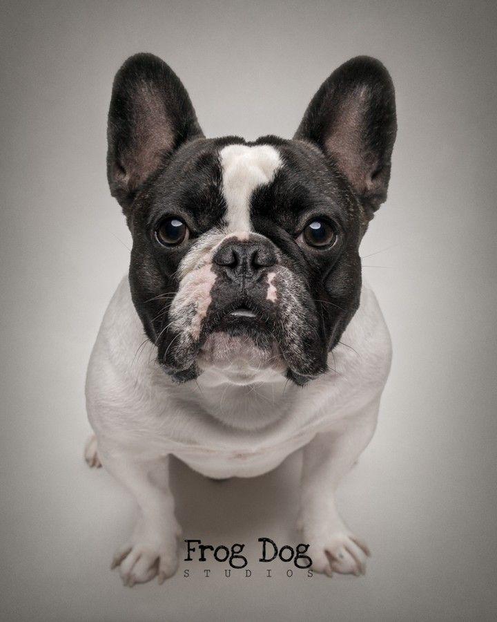 Pin On Frog Dog Studios