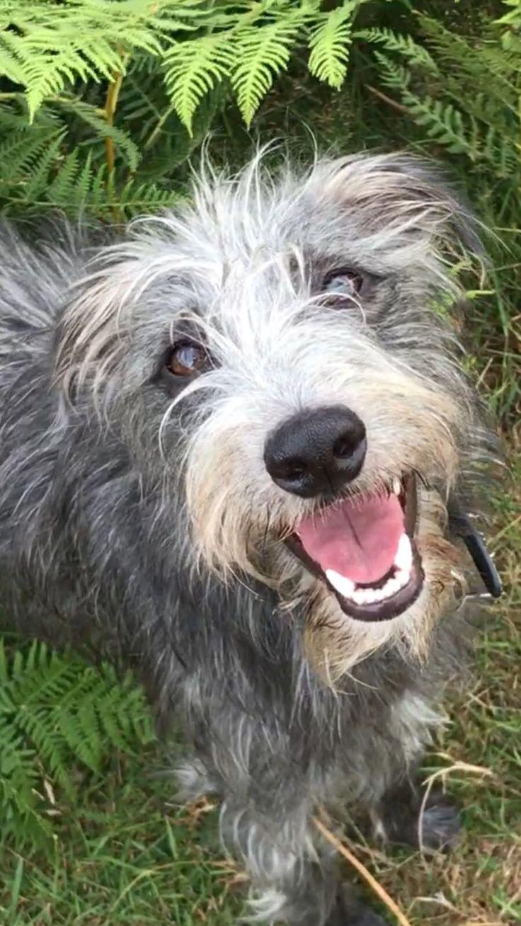 34 besten Dogs Bilder auf Pinterest   Tiere, Hunde und Beautiful