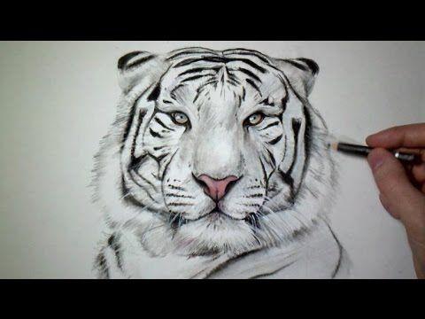 Comment dessiner un tigre [Tutoriel] - YouTube