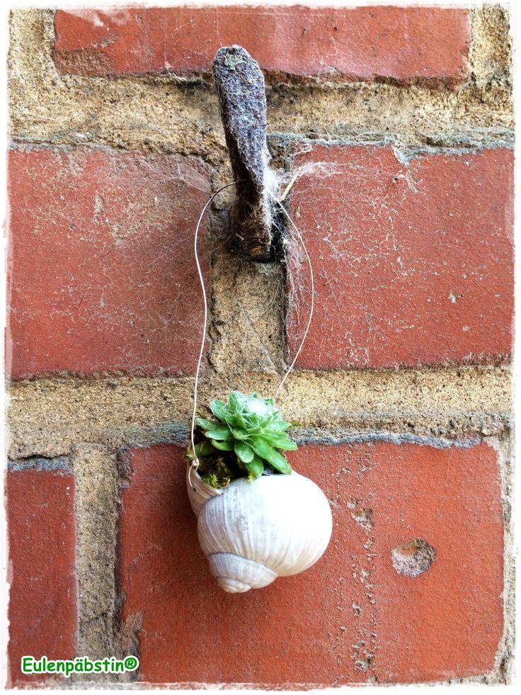 49 besten Pflanzen Bilder auf Pinterest Pflanzen, Gardening und - indoor garten wohlfuhloase wohnung begrunen