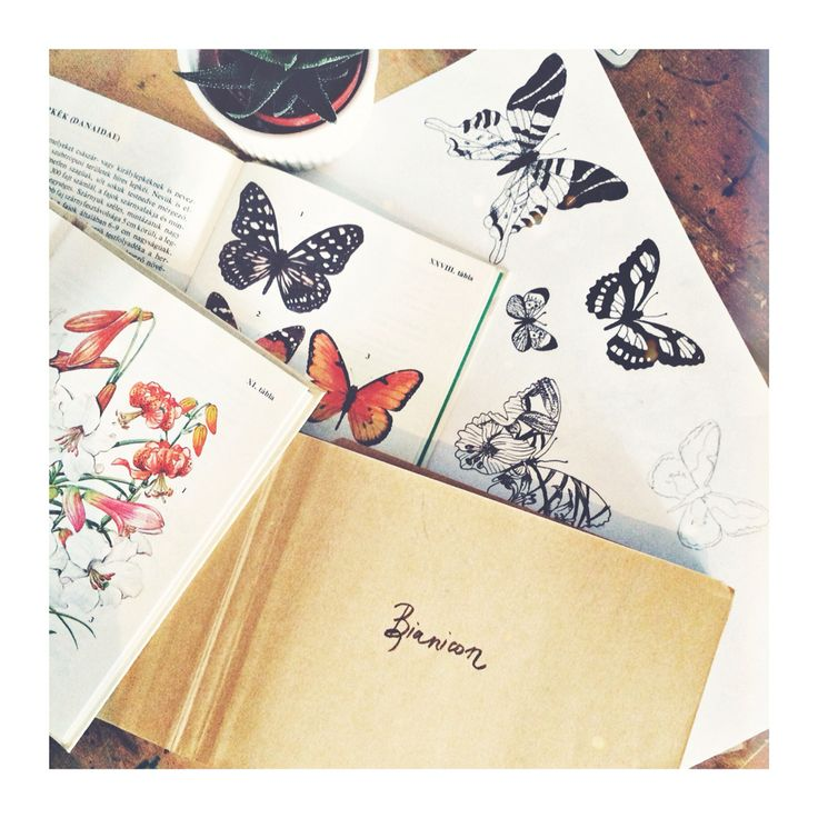 Butterfly  #bianicon #black #moth #tattoo #butterfly #design #linework #blackwork