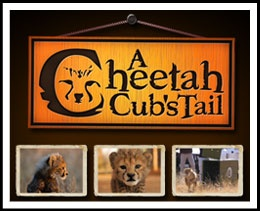 How sweet is this - check it out: Cheetah Cubs LIVE 24/7 - A LIVE video channel following the lives of a litter of cheetah cubs from birth to their hopeful re-introduction into the wild with sound and infrared night vision.