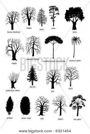 18 types of trees