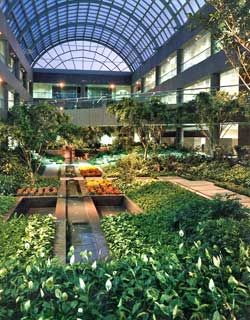 office landscaping. interior landscaping the idea of came into popularity over past two decades today many homes office buildings s