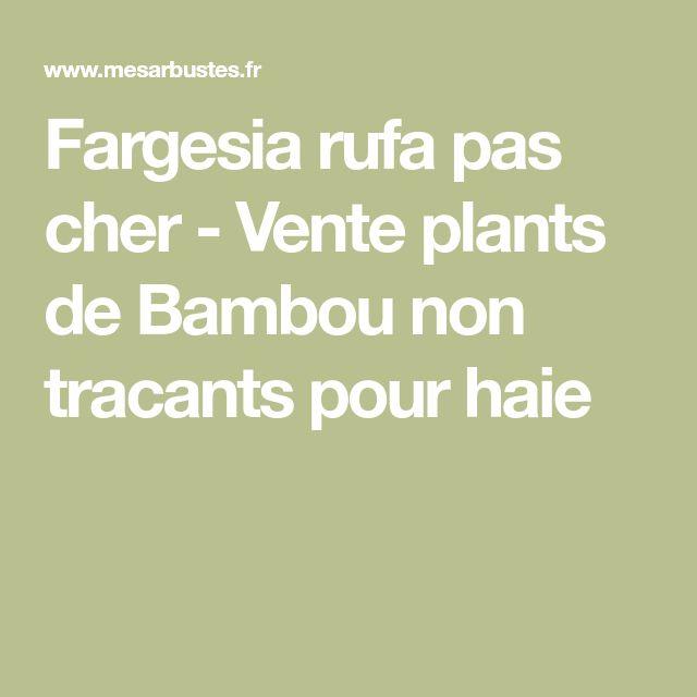 Fargesia rufa pas cher - Vente plants de Bambou non tracants pour haie