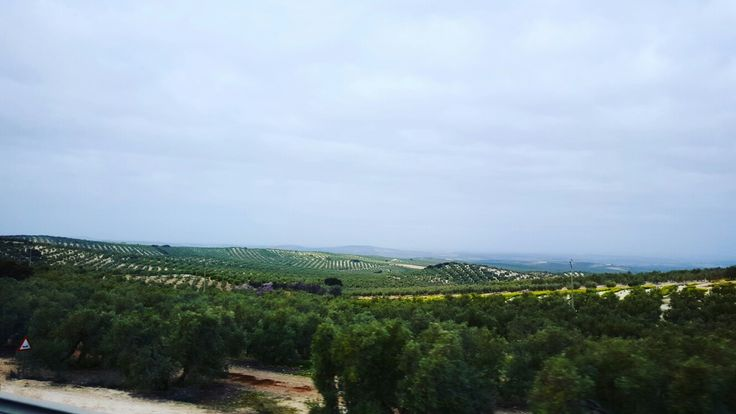 Countryside, Andalucia, Spain