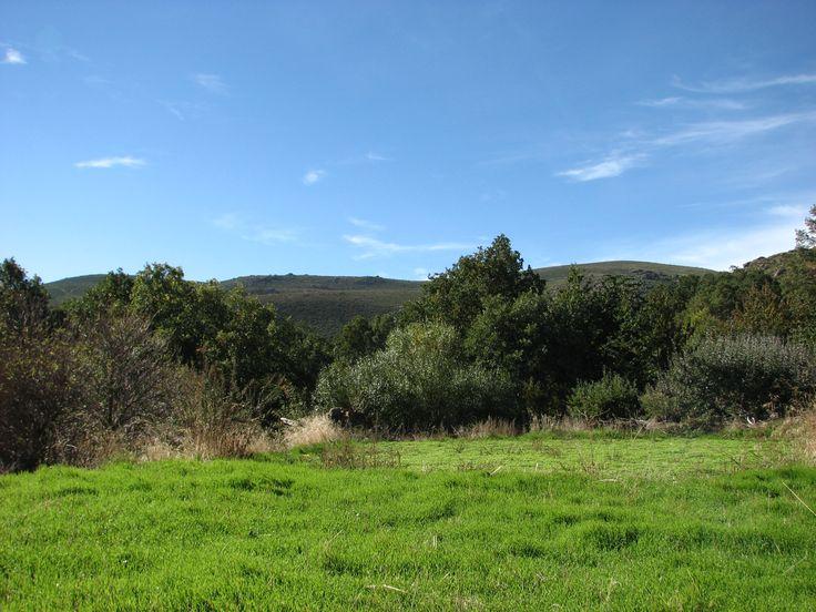 Uno de los prados de Tremedal, lugares de trashumancia estival de los ganados extremeños.