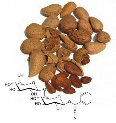 20-11-16: La amigdalina está en una semilla del interior del hueso de melocotones y albaricoques y en las almendras amargas. http://consejonutricion.com