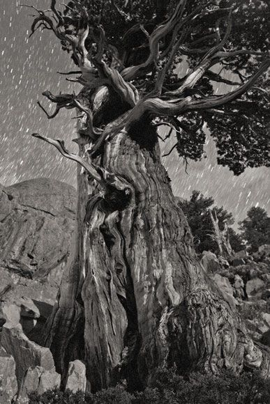 Swirly tree and stars by Ansel Adams