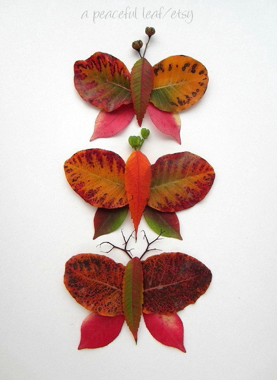 Leaf butterfly photo 8x10 Autumn color wall art by APeacefulLeaf