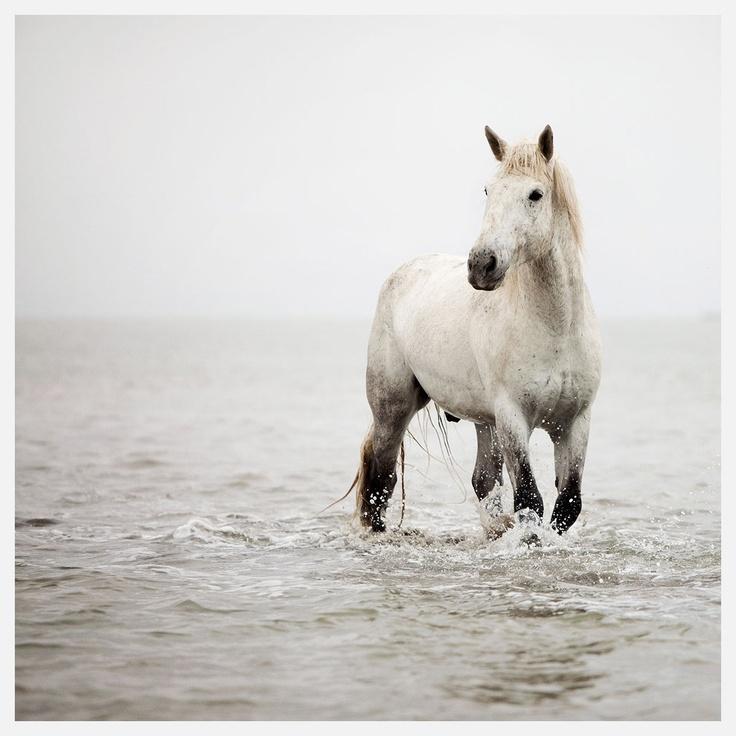 Horses   A Heart So White