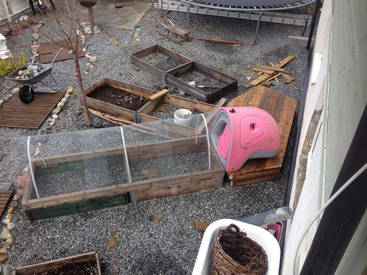 Omlet eglu Norway molde chickens hen garden backyard