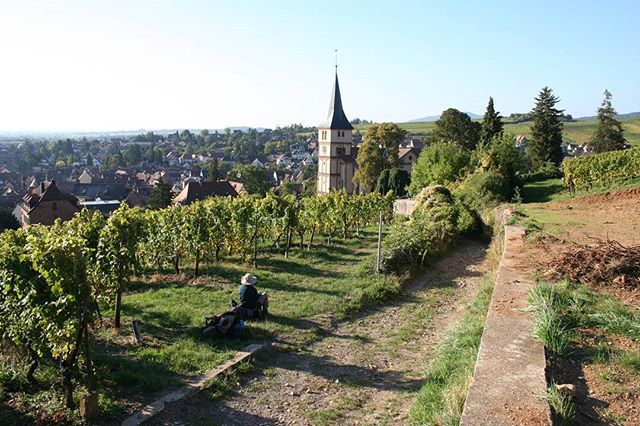 Vineyards by Barr, GR5  From our article on GR5 Vosges and Jura – walking the borderlands of France  https://www.cicerone-extra.com/gr5-vosges-and-jura-walking-the-borderlands-of-france  #trekking #instatrekking #hiking #mountaineering #trek #mountain #outdoor #backpacking #walking #walk #france #igersfrance #super_france #hello_france #europe #france_vacations #ig_france #explore #travel…