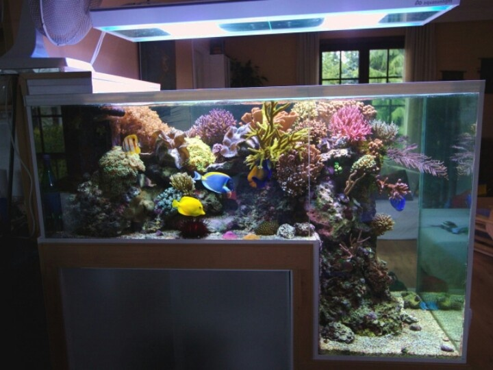 L shaped aquarium aquariums pinterest aquarium for Aquarium eau de mer