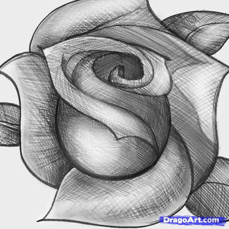 Step learn how to sketch a rose free step by step online drawing tutorials sketch drawing technique free step by step drawing tutorial will teach you in