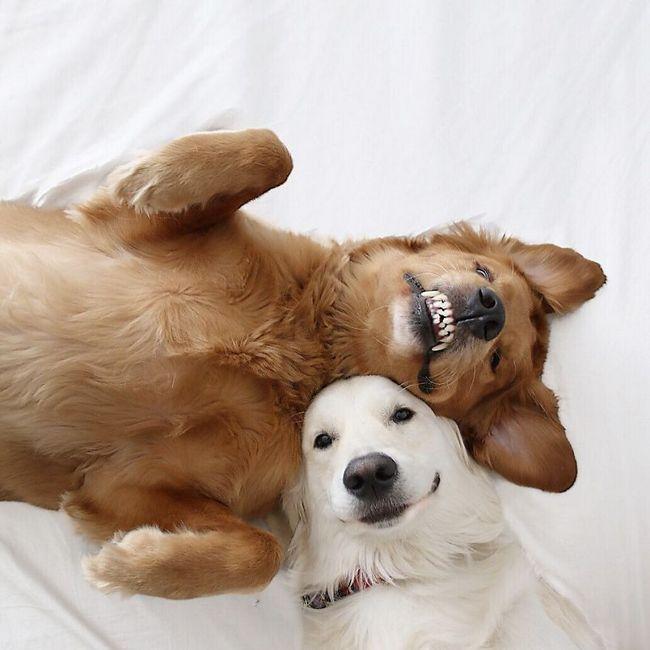 Картинки с собачками любовные