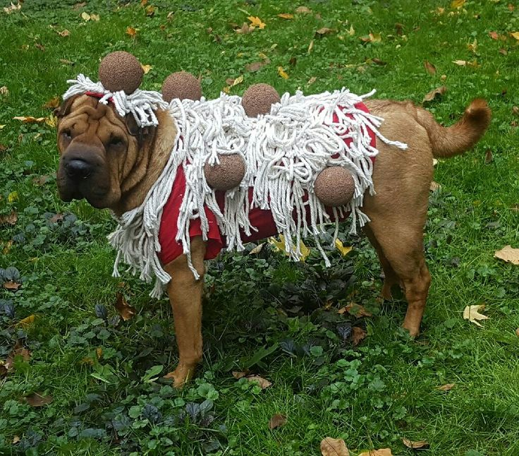 Best 25+ Dog costumes homemade ideas on Pinterest