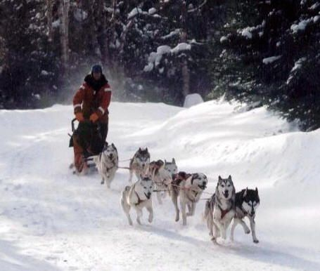 Google Image Result for http://lakelouise.com/images/Image/Lake%2520Louise/                                                    Dog_Sledding