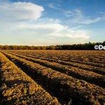 AgFax Weekend: 8,600 Acres for Sale; XtendiMax – Plenty of Questions; When Stress Doesn't Stop