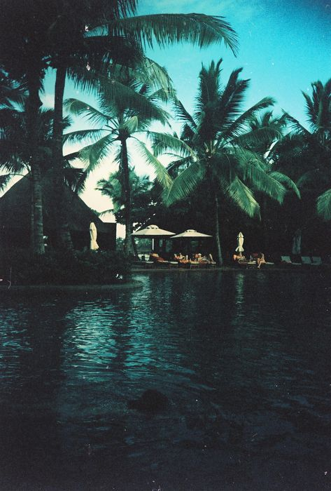 .: Water, Jungles, Dreams, Poolsid Vintage, Palms Trees, Islands Living, Paradis Islands, Tropical Islands, Pools Poolsid