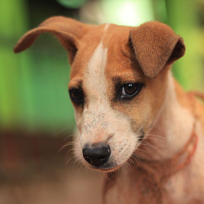 Модель в образе) #sunwhell #hellosunwhell #India #GOA #Индия #ГОА #собака #dog #animal  https://instagram.com/p/BBZg1VQqgPS