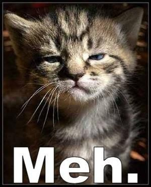 Meh.Animal Pics, Kitty Cat, Cat Humor, Funny Pictures, Mondays Mornings, Crazy Cat, Kittens, Funny Animal, Feelings