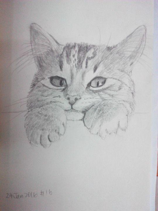 Cat sketching practice #016