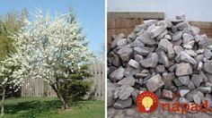 Prečo naši predkovia vkladali pod ovocné stromy kameň a vy by ste to mali skúsiť tiež!