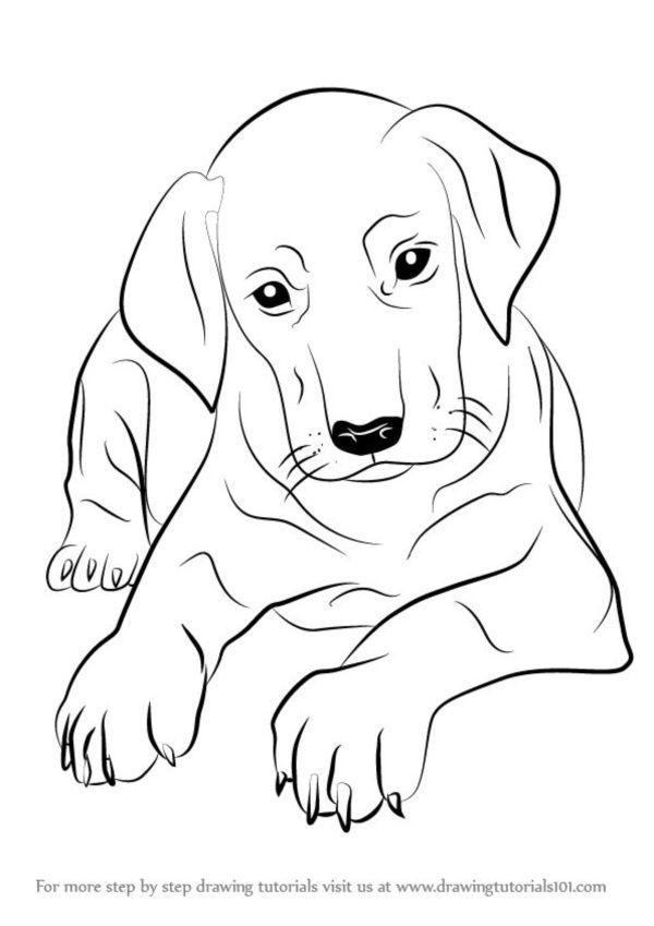 накидок картинки собак рисовать легко стал следствием