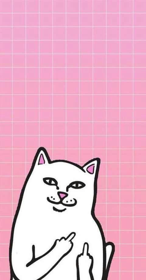 Imagen de wallpaper, cat, and pink